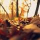 autumn-autumn-leaves-depth-of-field-414622