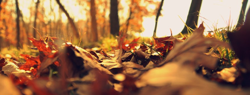 autumn-autumn-leaves-depth-of-field-414622